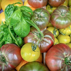 Tomate 3 couleurs